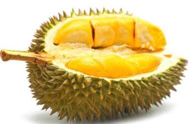 Durião ou Durian, fruta exótica asiática