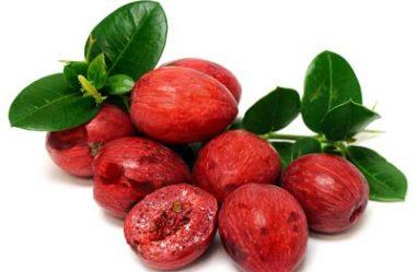 Ameixa Africana ou Ameixa de Natal – Conheça a Carissa