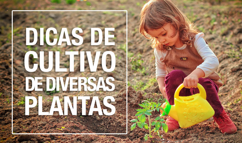 como-cultivar-plantas