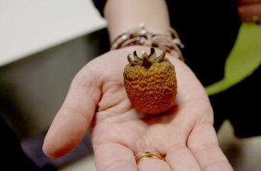 14º Encontro da ABFR (Associação Brasileira de Frutas Raras)
