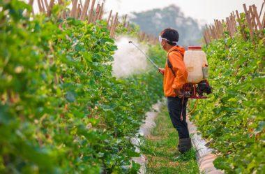 Dia do Combate da Poluição por Agrotóxicos