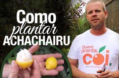 Dicas de como plantar e cuidar do seu achachairu