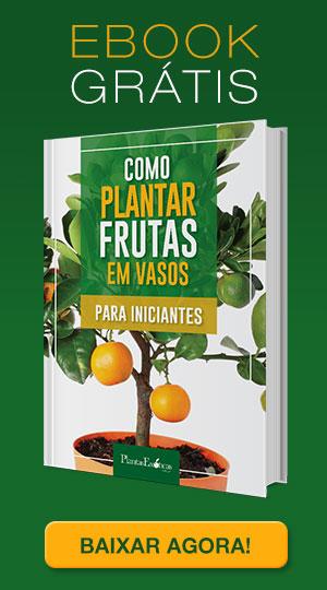 Como plantar frutas em Vasos