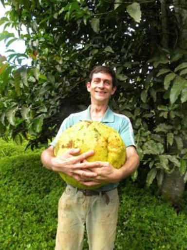 fruta pão africana elton