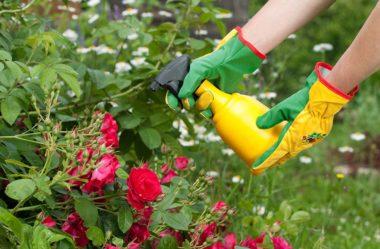 Agricultura orgânica: 3 Receitas de inseticidas naturais para proteger as plantas