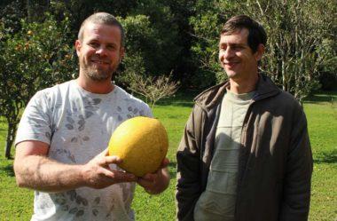 Projeto Colecionando Frutas: uma visita inesquecível