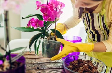 Como cuidar de orquídeas – O Guia Definitivo